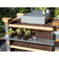 Desserte avec trois jeunes plants de salade et l'outil du jardinier vertical !